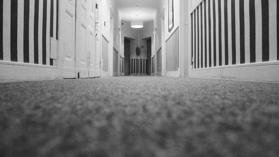 dust-mites-in-carpet